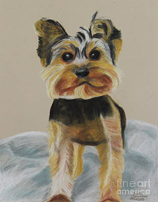 Painting - Cute Yorkie by Annette M Stevenson