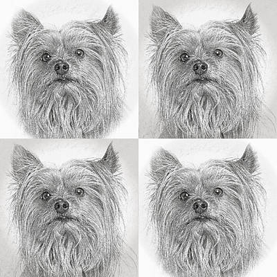 Digital Art - Cute Yorkie Times Four by Susan Stone