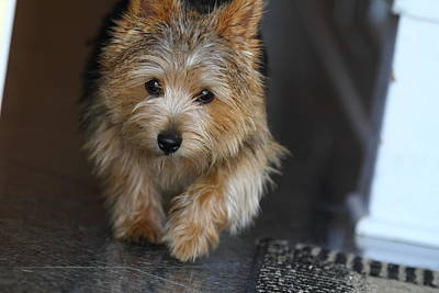 Furry Photograph - Cutest Dog Ever - Animal - 011322 by DC Photographer