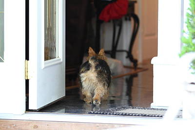 Furry Photograph - Cutest Dog Ever - Animal - 011329 by DC Photographer