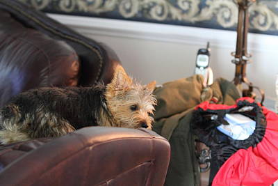 Cutest Dog Ever - Animal - 011331 Print by DC Photographer