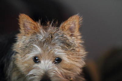 Furry Photograph - Cutest Dog Ever - Animal - 011332 by DC Photographer