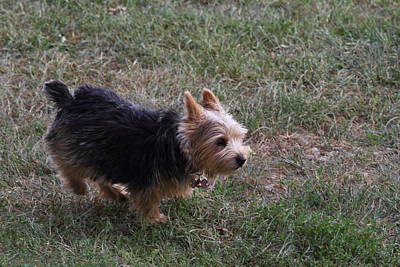 Fluffy Photograph - Cutest Dog Ever - Animal - 011346 by DC Photographer