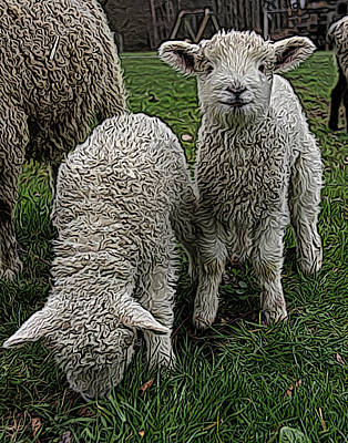 Cattle Dog Digital Art - Cutest Lamb Ever by Jen  Brooks Art