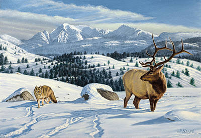 Elk Painting - Cutoff Mountain -  Elk And Coyote   by Paul Krapf