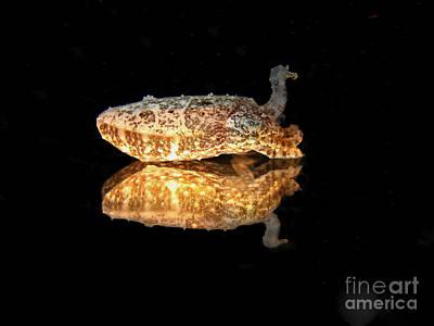 Cuttle Fish Reflections Art Print by Soren Egeberg