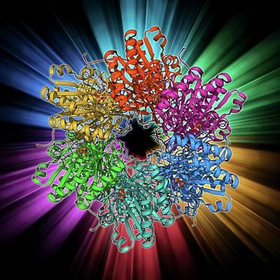 Molecular Structure Photograph - Cyanobacterial Circadian Clock Protein by Laguna Design