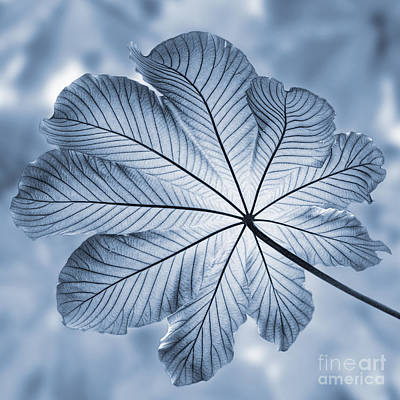 West Indies Photograph - Cyanotype Rain Forest Leaf by John Edwards