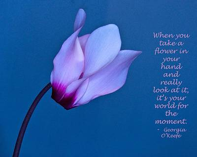 Photograph - Cyclamen On Blue With O Keefe Quote by Phyllis Meinke