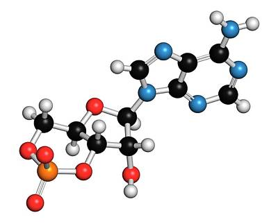 Cyclic Adenosine Monophosphate Molecule Art Print
