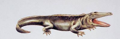 Triassic Photograph - Cyclotosaurus Prehistoric Amphibian by Deagostini/uig