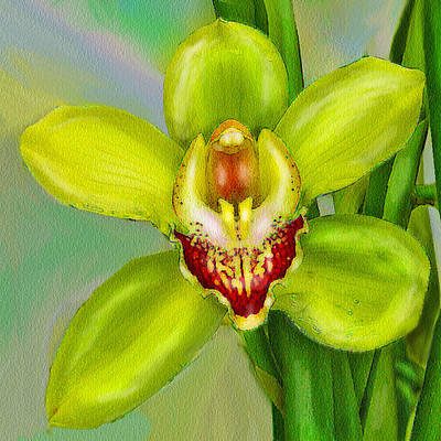 Digital Art - Cymbidium Orchid 2 by Jane Schnetlage