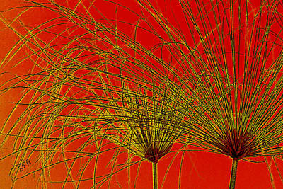 Photograph - Cyperus Papyrus Abstract by Ben and Raisa Gertsberg