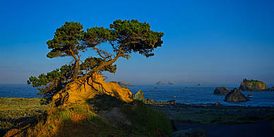 Photograph - Cypress 2013 by Ralph Nordstrom