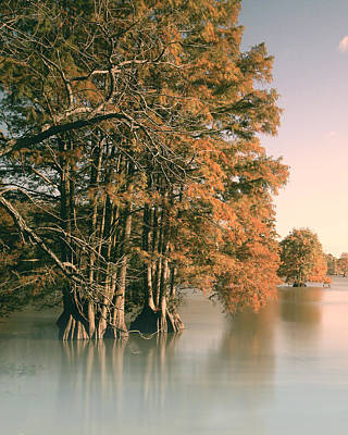 Bald Cypress Stump Photograph - Cypress Autumn  by Pete Federico