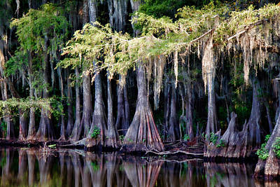 Cypress Bank Art Print by Lana Trussell