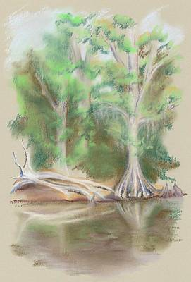 Cypress By The Waccamaw River Art Print by MM Anderson