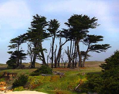 Photograph - Cypress California Style by Kandy Hurley