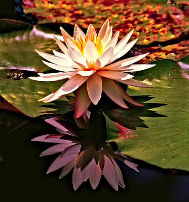 Photograph - Cypress Garden Water Lily by Bill Barber