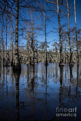 Photograph - Cypress Grove by Jim McCain