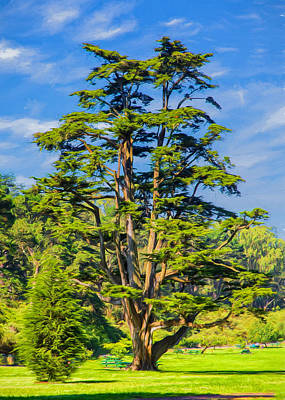 Platy Photograph - Cypress In Golden Gate Park by John M Bailey