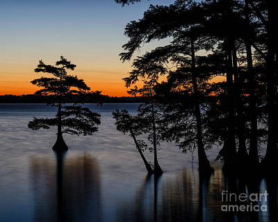 Photograph - Cypress In Predawn by Anthony Heflin
