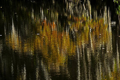 Cypress In Reflection Art Print by Andy Crawford