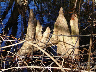 Photograph - Cypress Knees 1 by Lew Davis