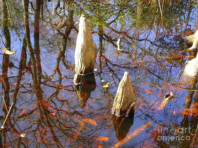 Photograph - Cypress Knees 2 by Lew Davis