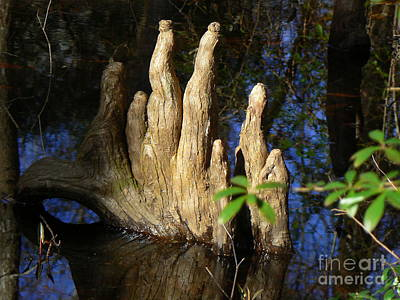 Photograph - Cypress Knees 4 by Lew Davis