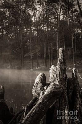 Cypress Knees In Sepia Art Print