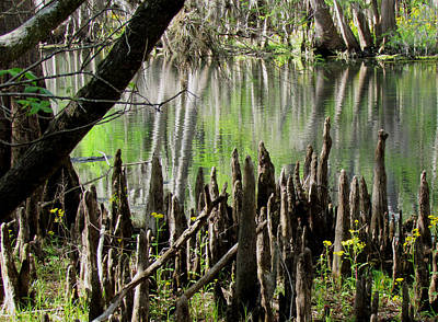 Photograph - Cypress Knees by Judy Wanamaker