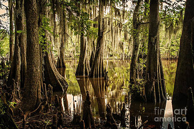 Photograph - Cypress Knees On Caddo Lake by Tamyra Ayles