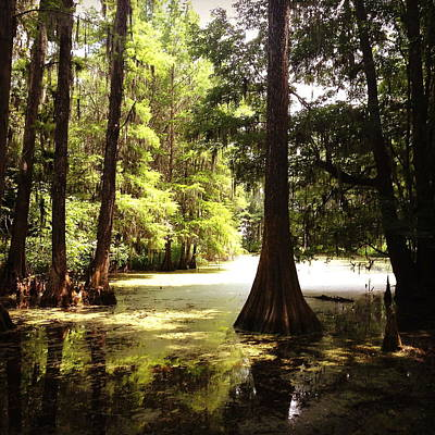 Cypress Swamp Photograph - Cypress by Laura Parrish