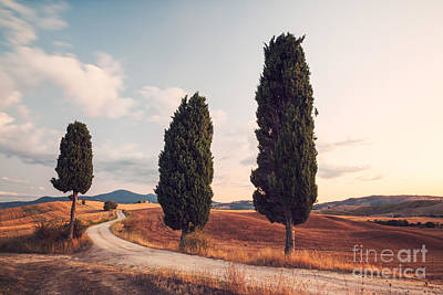 Landscape Photograph - Cypress Lined Road In Tuscany by Matteo Colombo