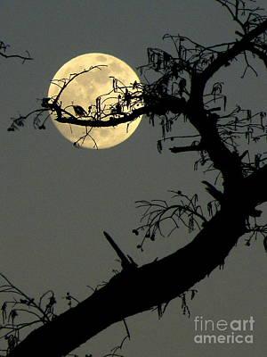 Cypress Moon Art Print by Joe Jake Pratt