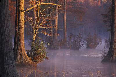Photograph - Cypress Morning by Jim Dollar