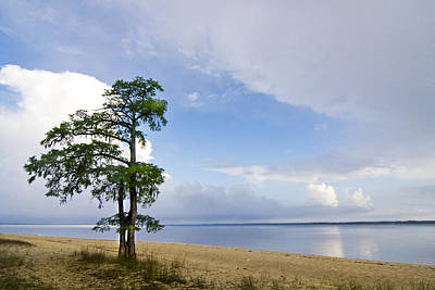 Print featuring the photograph Cypress On The Neuse by Bob Decker