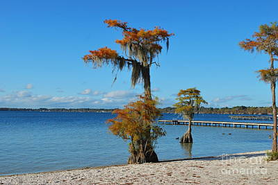 Photograph - Cypress On White Lake by Bob Sample