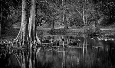 Cypress Pond Art Print by DeWayne Beard