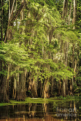Photograph - Cypress Reflection On Caddo Lake II by Tamyra Ayles