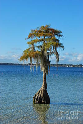 Photograph - Cypress Reflection On White Lake by Bob Sample
