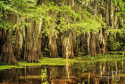 Photograph - Cypress Reflection On Caddo Lake by Tamyra Ayles