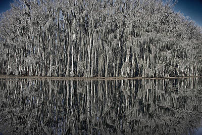 Surrealism Royalty-Free and Rights-Managed Images - Cypress Reflections at Caddo Lake by Mary Lee Dereske