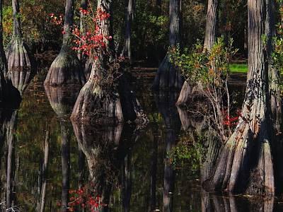 Cypress Reflections Art Print by Laura Ragland
