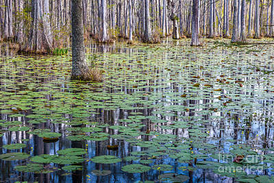 Photograph - Cypress Reflections by Susan Cole Kelly