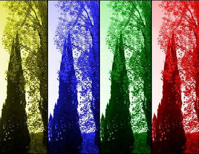 Cypress Art Print by Rick Todaro