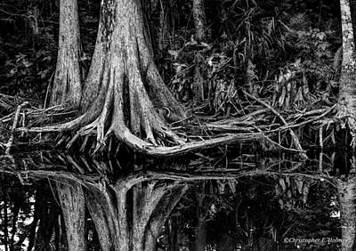 Photograph - Cypress Roots - Bw by Christopher Holmes