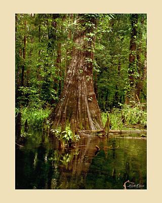 Cypress Roots Ichetucknee Art Print by Linda Olsen