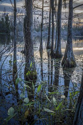 Photograph - Cypress Swamp by Debra and Dave Vanderlaan